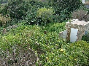 Landhaus auf Gozo - Rennovierungsbedürftig