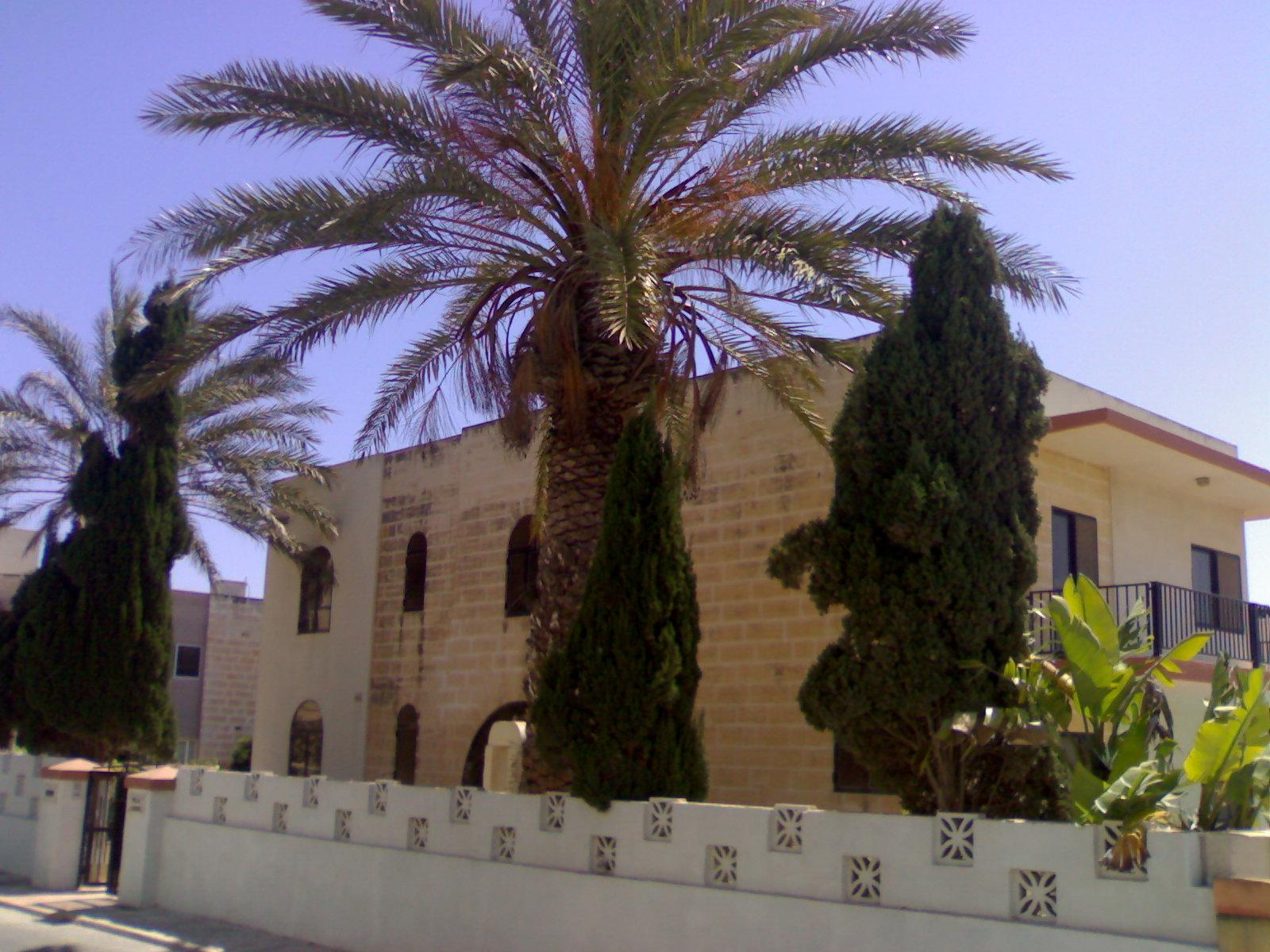 Villa mit Palmen